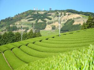 掛川市の画像